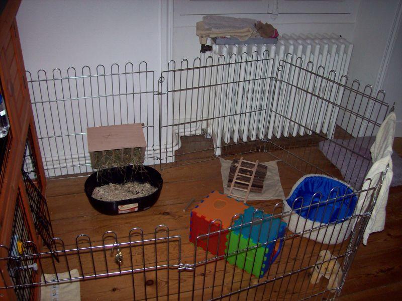 lapin nain b lier gribouille archives du blog l enclos de gribouille. Black Bedroom Furniture Sets. Home Design Ideas